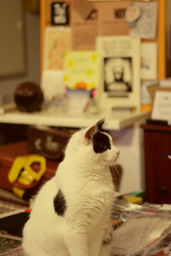 28th my cat 01